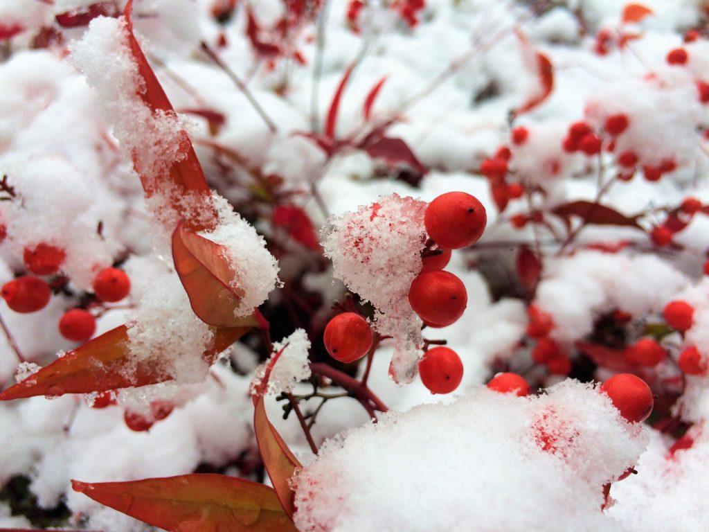 Winter in KAIST Campus - South Korea - 2015